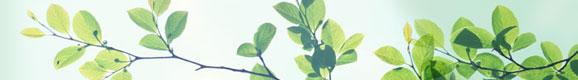 大草胃腸薬 弘真胃腸薬 大草丸 延寿丸 大地の恵みで皆さんの健康を守る大草薬品